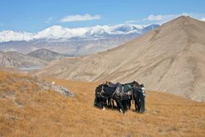 géographie kirghizistan