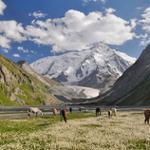 Chevaux lac Issyk kul Kirghizistan